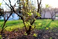 Picture nature, spring, leaves