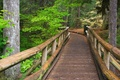Picture trees, Bridge, forest, trail