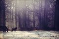 Picture snow, pony, winter, fog, the sun, horse, forest