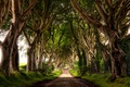 Picture road, summer, trees, alley