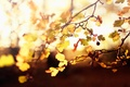 Picture light, twigs, yellow, leaves, tree, blur, berries, the fruit, effect., autumn