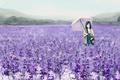 Picture field, girl, flowers, umbrella, basket, umbrella, art, lavender