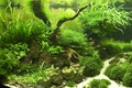 Picture plants, aquarium, fish