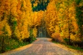 Picture road, trees, autumn, forest, nature
