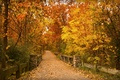 Picture Park, bridge, the way, trees, leaves, benches, lampposts, autumn