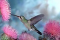 Picture flowers, birds, nature, Hummingbird, bird, blue background