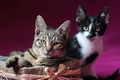 Picture posing, kittens, box