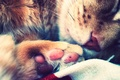 Picture cat, foot, paw, sleeping, cat