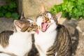 Picture friends, Koshak, cats, Kote