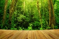 Picture the platform, forest, thickets, trees