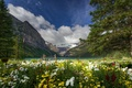 Picture flowers, mountains, nature, trees, Canada, lake, Lake Louise, Banff National Park, Canada