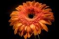 Picture paint, background, petals, flower
