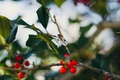 Picture berries, ring, red, stone, branches, leaves