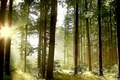 Picture nature, forest, light