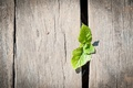 Picture macro, green, background, Wallpaper, the fence, leaf, wooden, wallpaper, leaves, widescreen, background, full screen, HD ...