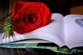 Picture style, scarlet rose, book, rose