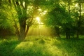 Picture forest, summer, the sun, light, trees