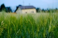 Picture widescreen, HD wallpapers, Wallpaper, house, wheat, field, rye, full screen, background, fullscreen, macro, widescreen, background, ...