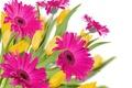 Picture Pink, pink, tulips, Gerberas, gerbera, tulips, drops