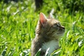 Picture cat, spring, greens, cat, may, grass, spring