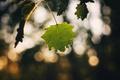 Picture autumn, macro, nature, sheet