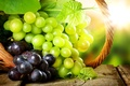Picture leaves, the sun, glare, basket, berry, grapes, bunches