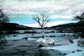 Picture snow, river, rendering, The sky, ice, Swan.