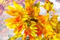 Picture flowers, nature, petals, garden