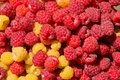 Picture macro, berries, raspberry, color