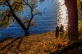 Picture pair, tree, Park, pond, sadness, autumn