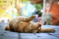 Picture lies, the sidewalk, red, bokeh, street, Cat, paws, cat