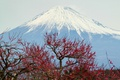 Picture the sky, trees, mountain, the volcano, Japan, panorama, Fuji