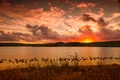 Picture lake, duck, landscape, sunset