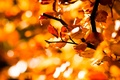 Picture leaves, widescreen, leaves, blur, HD wallpapers, Wallpaper, tree, leaves, tree, full screen, background, macro, widescreen, ...