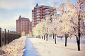 Picture winter, snow, trees, city, the city, street, building, frost, Nature, trees, the ranks, winter, snow, ...