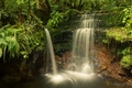 Picture greens, forest, trees, stream, stones, waterfall, moss, New Zealand, cascade, the bushes, Dunedin, Otago, Leith ...