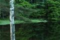 Picture Quattro, Foveon, tree, lake, greens, summer, grass, Sigma, forest