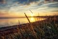 Picture reflection, sun, the stems of plants, sunshine, lake, sunset, reflection, lake, bokeh, plant stalks, the ...
