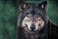 Picture wolf, painting, face, wolf