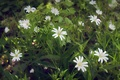 Picture flowers, macro, white, spring