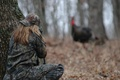 Picture turkey, camouflage, hunter, forest