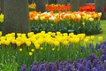 Picture Trees, Tulips, Garden