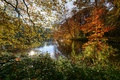 Picture autumn, leaves, trees, branches, pond, Park, Netherlands, the bushes