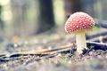Picture forest, grass, macro, red, nature, mushroom, mushroom, spots
