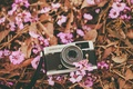 Picture flowers, petals, the camera, camera, pink, lens