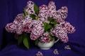 Picture lilac, bouquet, vase, lilac, bunches