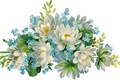 Picture beautiful, white background, flowers, blue flowers