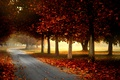 Picture Park, road, leaves, fall, leaves, path, colors, trees, walk, autumn, forest, park, forest, nature, trees, ...