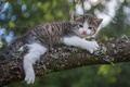 Picture look, tree, cute, kitty