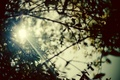 Picture wallpapers, day, Wallpaper, leaves, photo, the sun, branches, rays, background, plants, branch, nature, trees, blur, ...